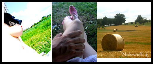 Montage_campagne